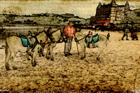 donkey riding on beach